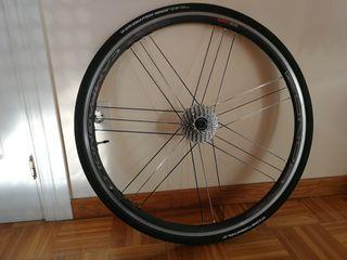 ruedas campagnolo zonda