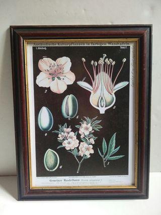 Cuadro flores botánico
