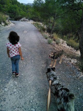 Alcoy niñera y cuidadora de mascotas, perros, gato