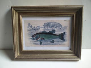 Cuadro pez Marco plateado