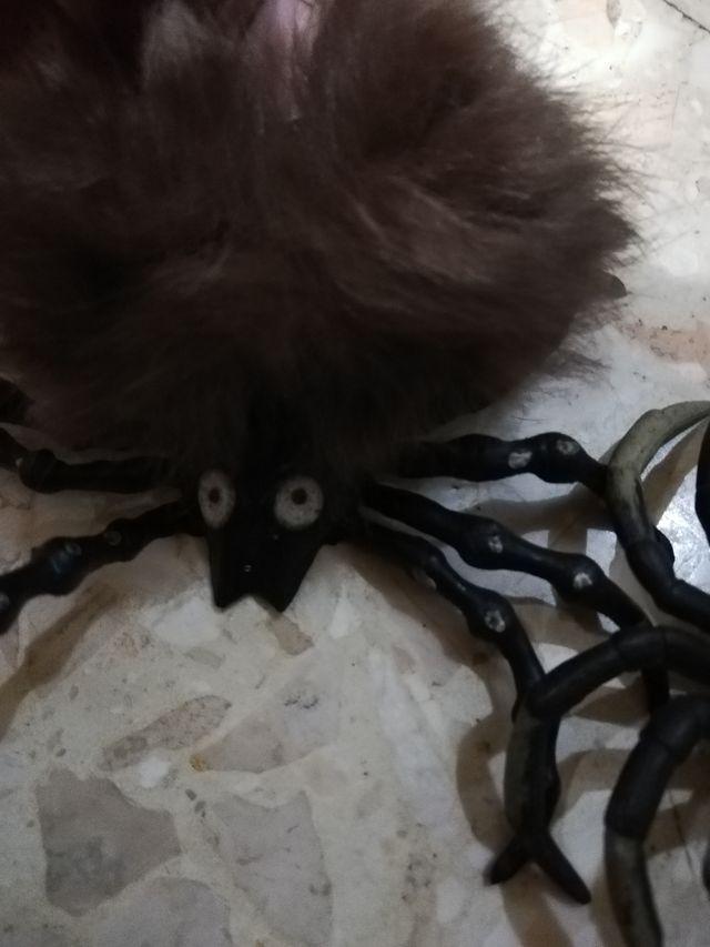 Halloween Arañas