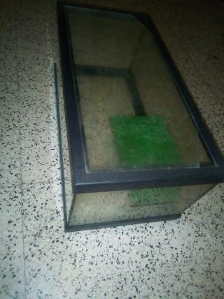 Acuario terrario para tortugas con motor