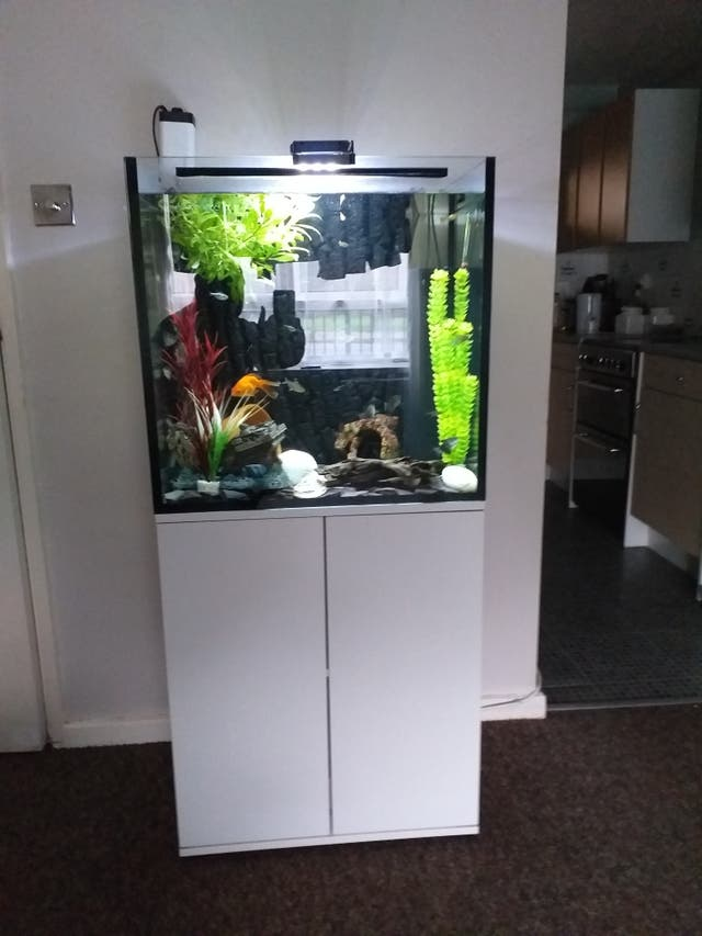 fishtank with stand