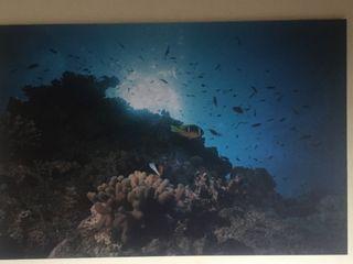 Cuadro fotografia retrato submarino