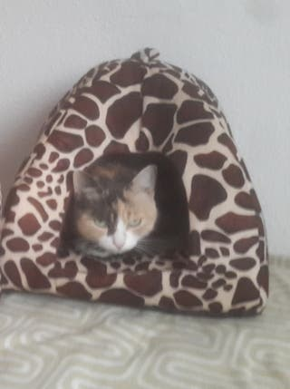 Casa tipo Cueva pequeña para mascotas