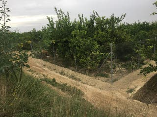 Terreno de huerta