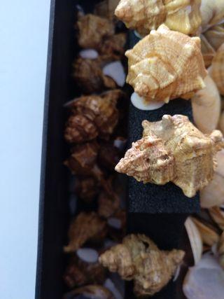 cajas de conchas ,caracoles de mar ,ostras etc..