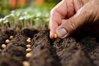 vendo semillas para huertos