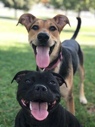 Cuidador de perros, adiestrador y paseador