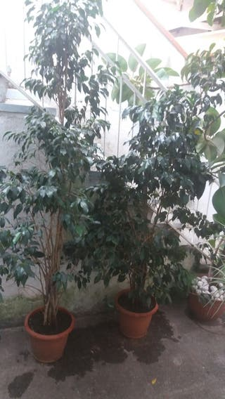 Varias plantas grandes