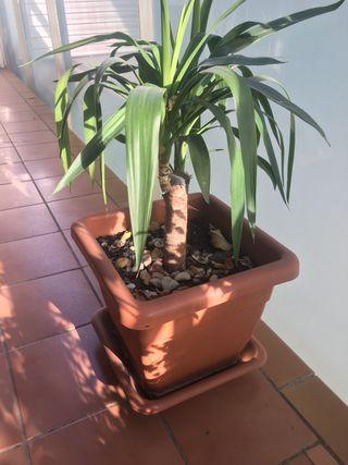 Planta de jardin