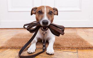 Adiestramiento canino/felino a domicilio