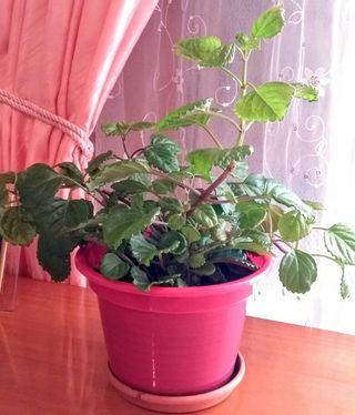 Plantas, macetas, flores, jardín