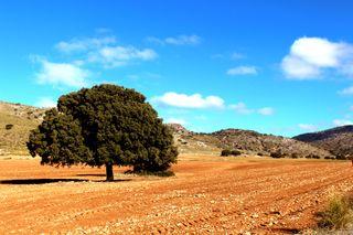 Finca rústica 940ha - Casas, cultivo y monte.