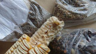 Intercambio de semillas ecológicas tradicionales..