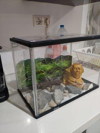 Terrario aquario.