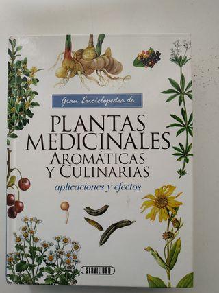 Plantas medicinales aromáticas y cuinarias