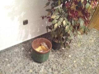 Jarrón decorativo con planta artificial incluye m