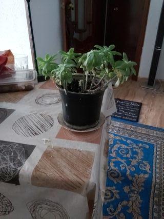 se vende planta