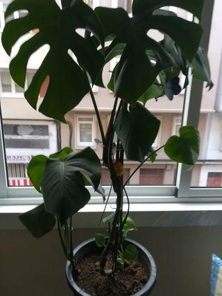 planta dos macetas y pie para macetas