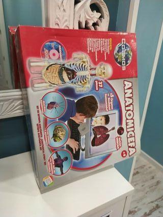 anatomicefa cefa toys
