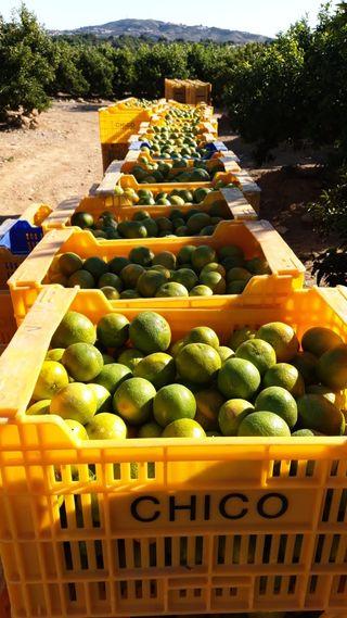 Gente para la naranja