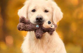 Niñera,cuidadora de perros