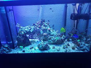 acuario arrecife decoración marino