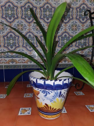 planta con macetero de ceramica