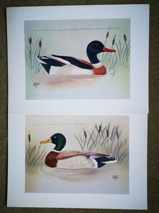 2 Láminas de patos