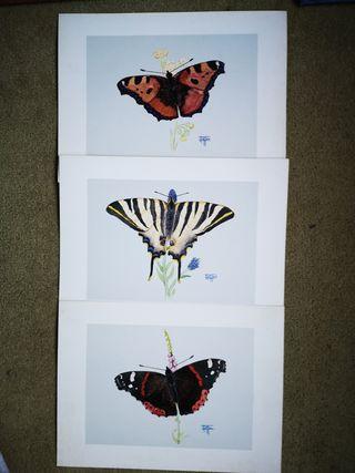 Lote de 3 láminas antiguas de mariposas