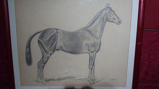 caballo al carboncillo