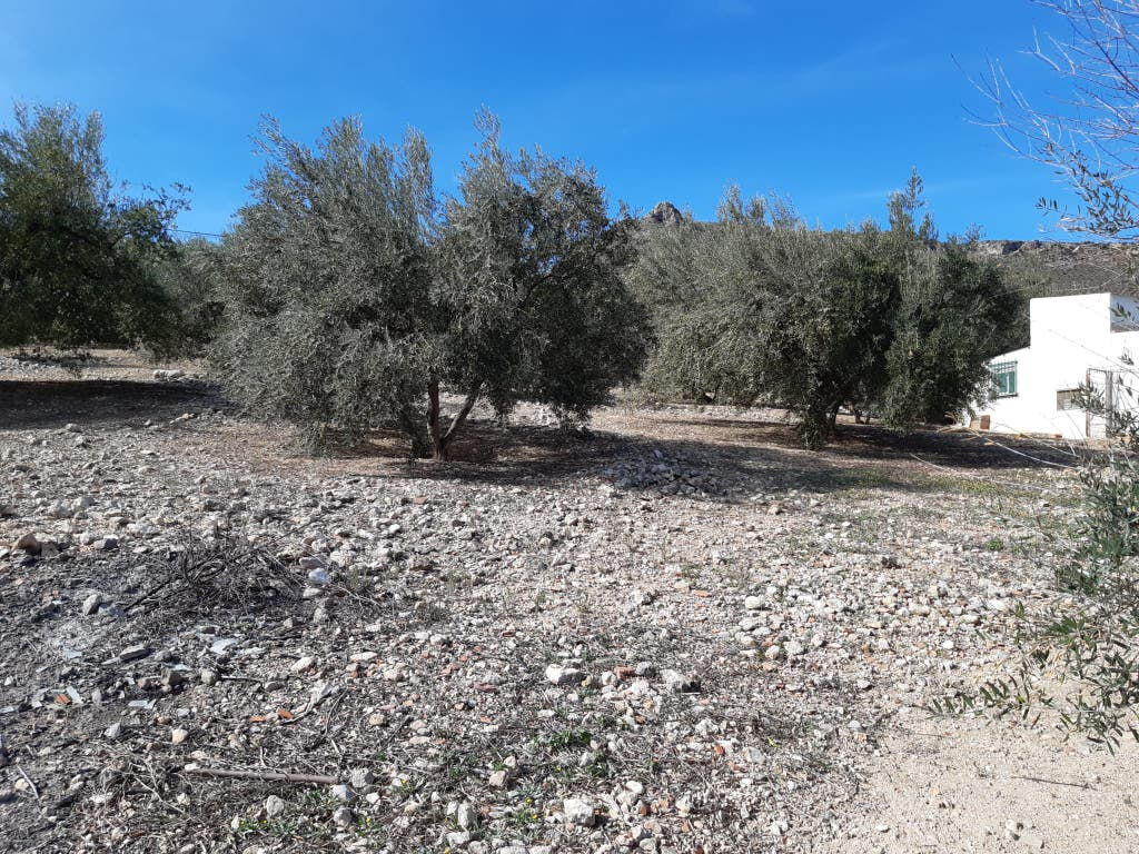 Ref.: V873 Se vende casa rural en T.M. Alcaucin (Alcaucín, Málaga)
