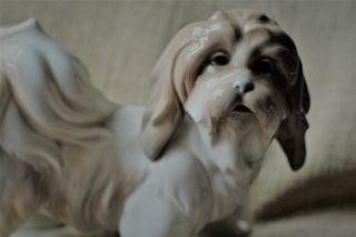 Perro porcelana Lladró