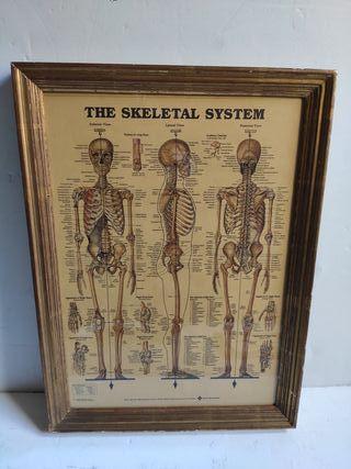 Cuadro esqueleto marco dorado