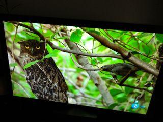 """Televisión Led LG 9500SL 42"""" + Smart TV"""