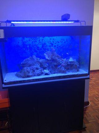 acuario marino 240L y mueble
