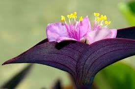 Planta flor colgante (Más plantas en mí perfil