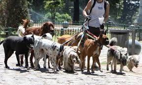 paseador de perros