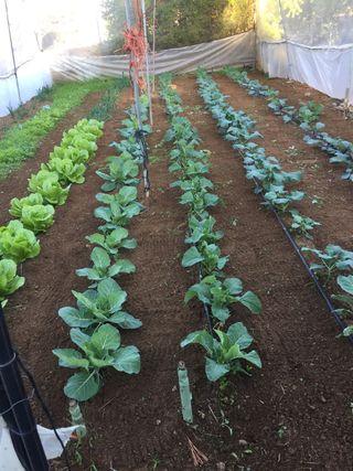Verdura ecológica