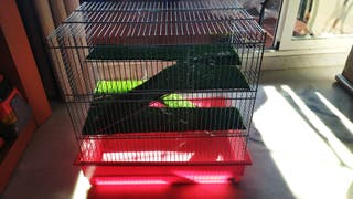 Jaula hamsters