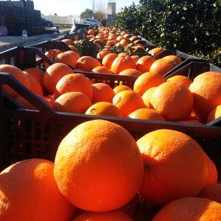oranges mandarines citrons