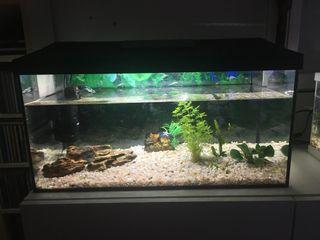 acuario peces
