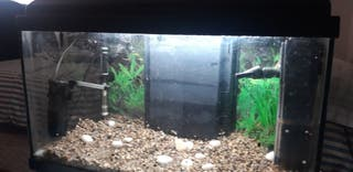 acuario peces agua dulce