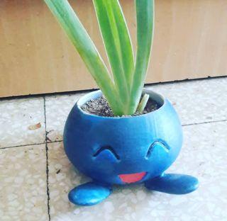 Maceta Oddish , Pokémon