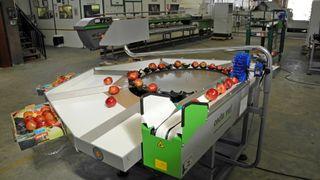 Calibradora de Fruta Electrónica Circular