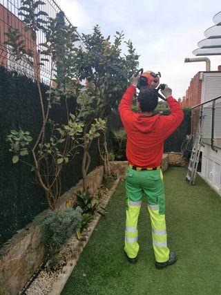 jardineros Aljarafe y sevilla