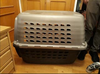 Transportin IATA mascotas perros gatos kennel