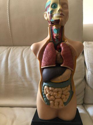 Muñeco medicina miniland 50 cm