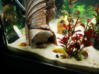 acuario 150litro